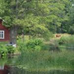 Vandra i Sverige – Alsterån i Småland är ett av Världsnaturfondens 10 tips