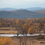 Vandra i Sverige – Flatruet i Jämtland är ett av Världsnaturfondens 10 tips