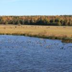 Vandra i Sverige – Fyrisån i Uppland är ett av Världsnaturfondens 10 tips