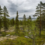 Vandra i Sverige – Karatj-Råvvåive i Norrbotten är ett av Världsnaturfondens 10 tips