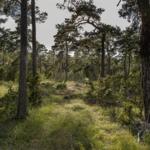 Vandra i Sverige – Ojnareskogen på Gotland är ett av Världsnaturfondens 10 tips
