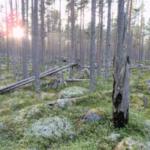 Vandra i Sverige – Ore skogsrike i Dalarna är ett av Världsnaturfondens 10 tips