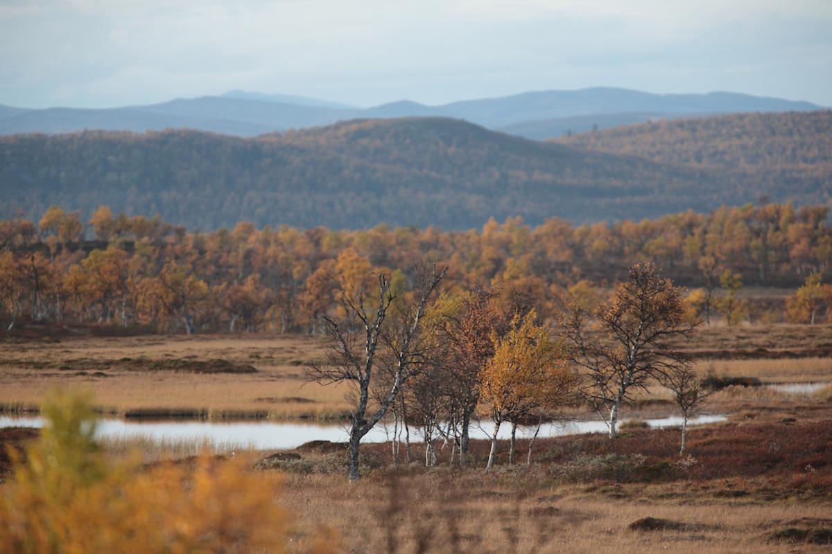 Vandra i Sverige – här är 10 platser som Världsnaturfonden rekommenderar