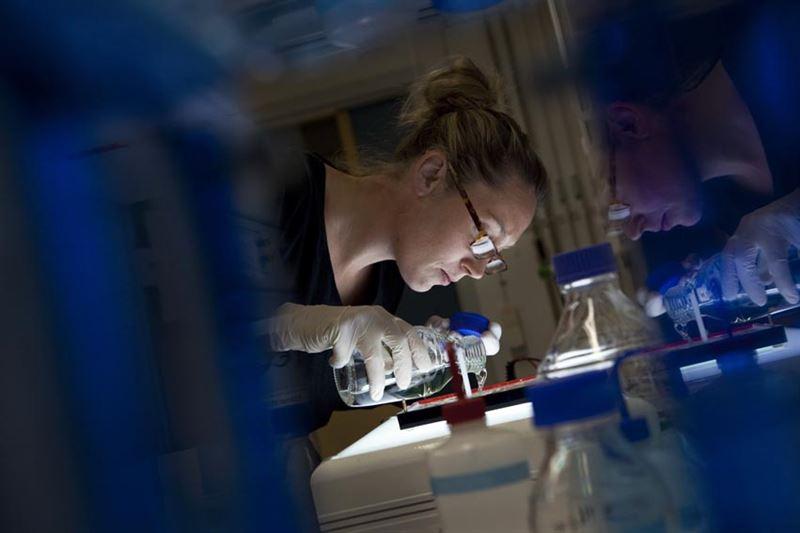 Forskare som studerar immunförsvaret